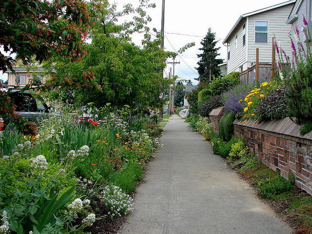 colorful water conserving plants along a sidewalk