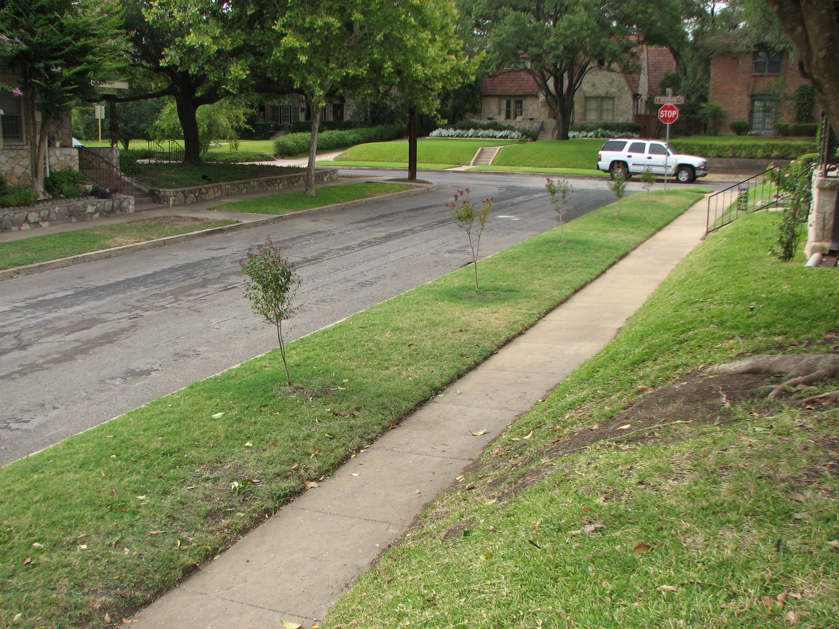 A narrow parking strip planted with turf and tree saplings between a residential street and a sidewalk
