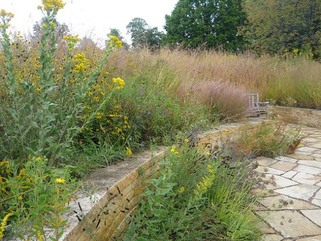 Grasses and yellow and purple flowers by a rock wall
