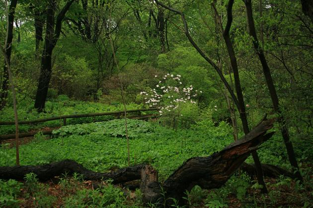 Native woodland garden in spring features different plant layers
