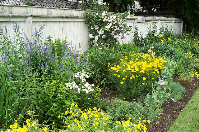 planting bed with colorful flowering plants along a fence