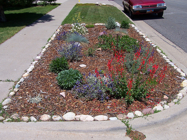 Xeriscape plants in a parking strip with bark mulch next to a turf parking strip