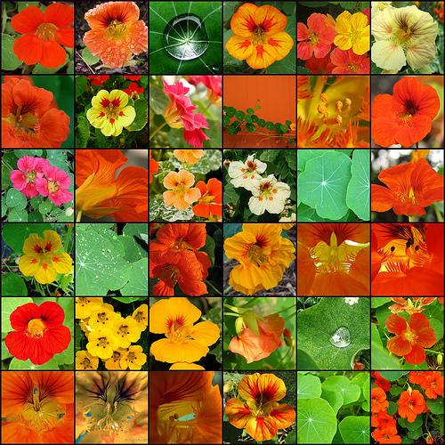 A collection of red yellow and orange flowers