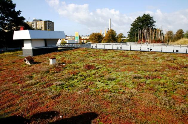 low growing plants growing on a rooftop
