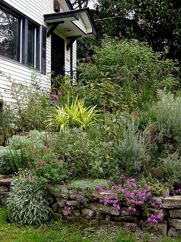 shrubs and flowering plants above a low stone wall lead up to the entrance of a house painted white with black trim