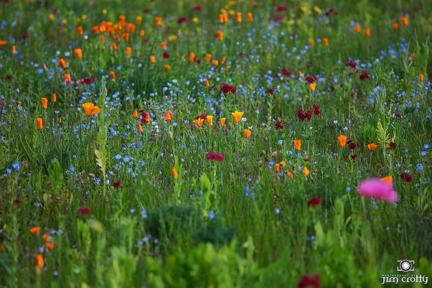 Orange, blue, and red wildflowers