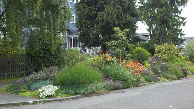 a mounded parking strip with water wise plants