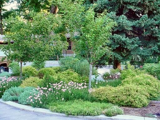 Flower bed with trees, flowers, and greenery