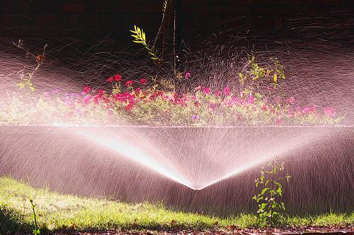 Sprinkler watering lawn and flower beds